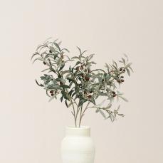花见小路·橄榄枝